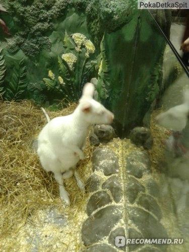 Белый кенгуру Контактный зоопарк. Отзывы