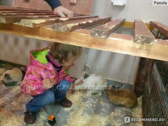 Контактный зоопарк на Тушинской, Москва фото