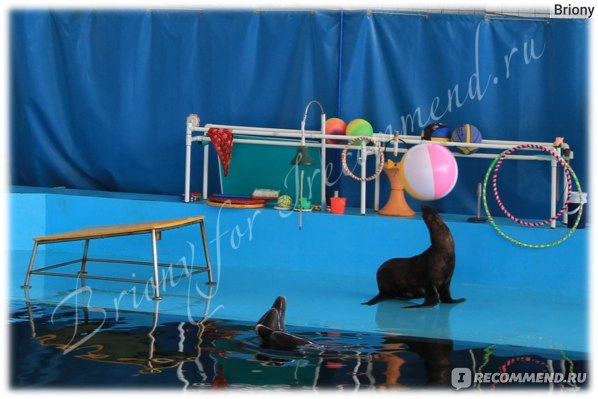 Карадагский дельфинарий, Курортное, Крым фото