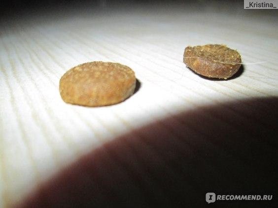 Две гранулы корма Acana.С курицей с лева,с ягненком с права
