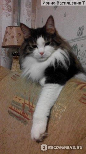 Паста для вывода шерсти Cliny для кошек фото