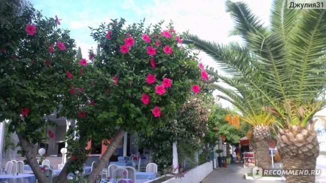 Le Hammamet 4* HOTEL & SPA (ex. Dessole, Тунис). Улица перед отелем.