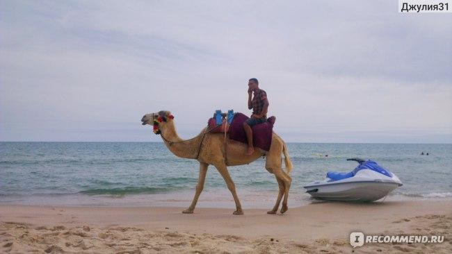 Le Hammamet 4* HOTEL & SPA (ex. Dessole). Обычная для пляжа Туниса картина.