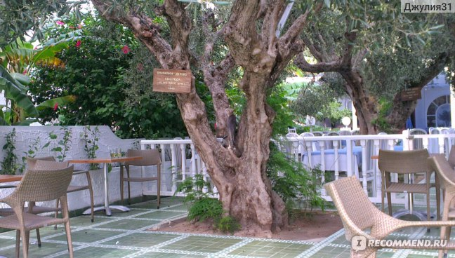 Le Hammamet 4* HOTEL & SPA (ex. Dessole, Тунис). Территория отеля