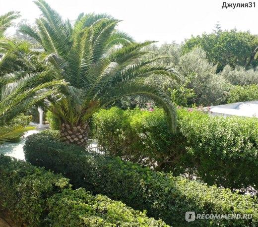 Le Hammamet 4* HOTEL & SPA (ex. Dessole, Тунис). Территория отеля.