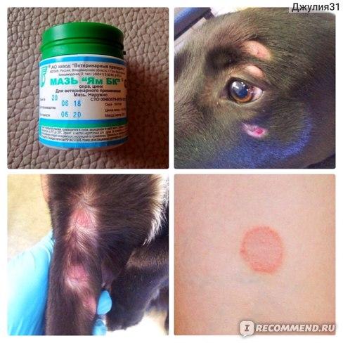 Ветеринарная мазь ЯМ БК для лечения лишайных папул у животных и людей. Типичные проявления микоза на коже.