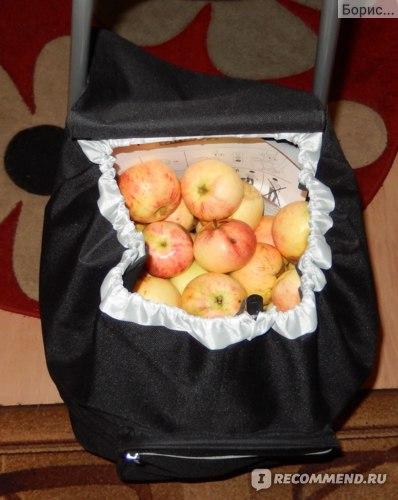 А вот и яблоки