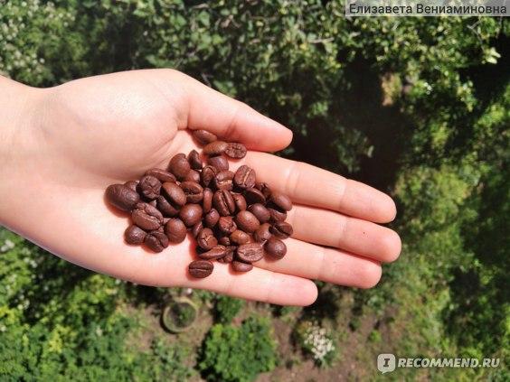 Ароматизированный кофе Кофейная Кантата Мокка Де Люкс фото
