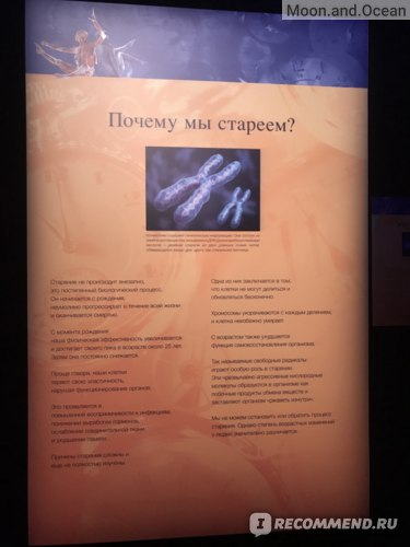 Body Worlds, Мир тела, Москва фото