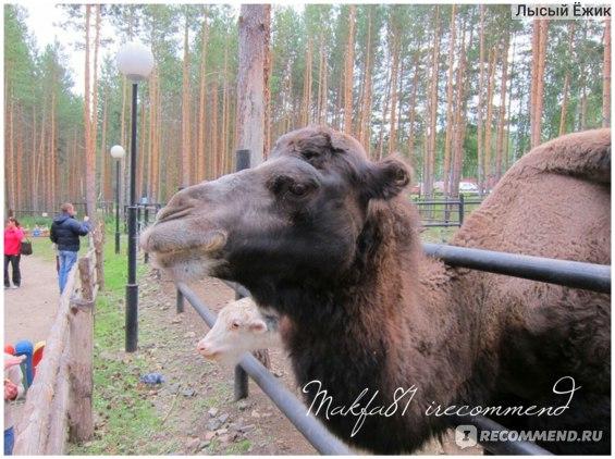 Зоопарк Абзаково отзывы