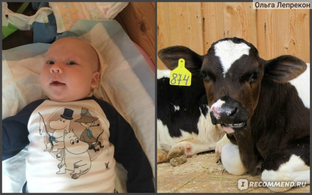 Слева мой сын, справа - вылеченный колхозный теленок