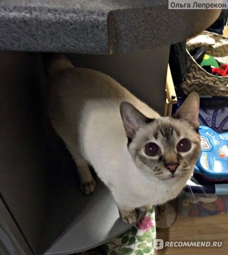 Корм для кошек Almo Nature паучи с Лососем и Тыквой, 55г фото