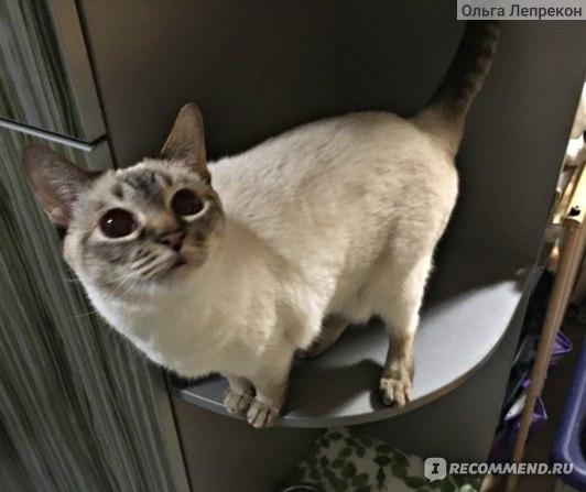 Кошка вся извертелась