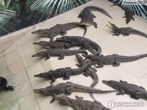 Крокодиловая ферма в Архипо-Осиповке