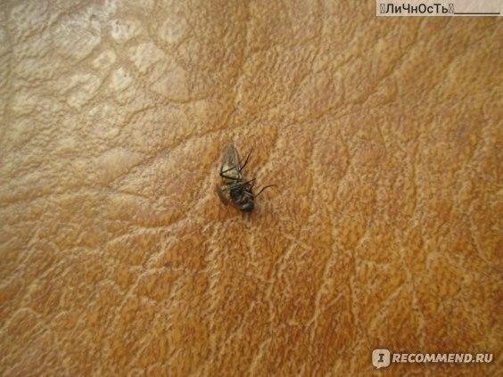 """Средство от мух Mosquitall Пластины """"Защита от мух. Для дома и дачи"""" фото"""