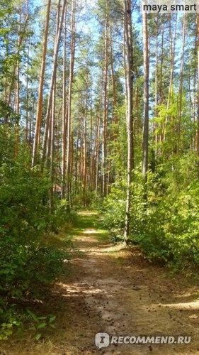 Можно прогуляться по зеленой тропинке