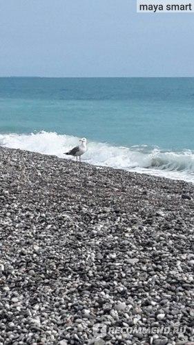 На пляже много чаек, крупных и наглых, не боящихся людей