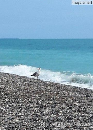 Черное море в Абхазии