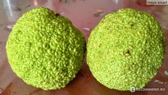 Адамово яблоко, или маклюра, стоимость 100 руб. за 1 шт. (2015 г.)