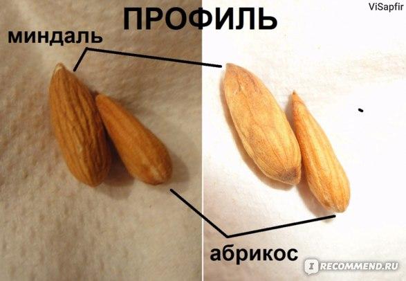 Орехи   Миндаль фото
