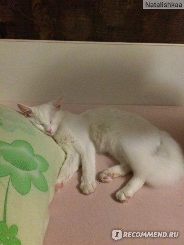 любит спать именно на подушечке