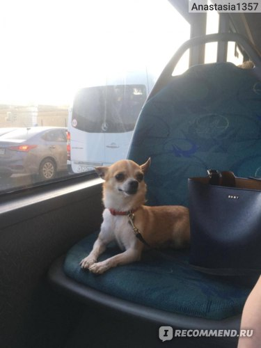 Безбилетный пассажир автобуса