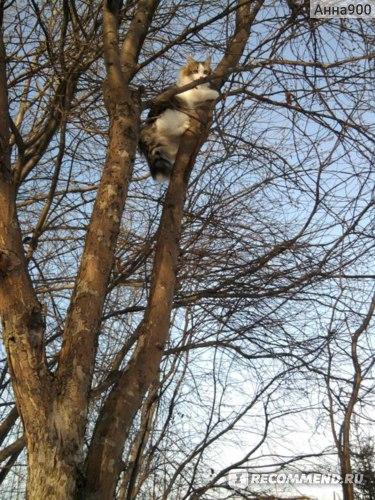 Первый раз залез на дерево!