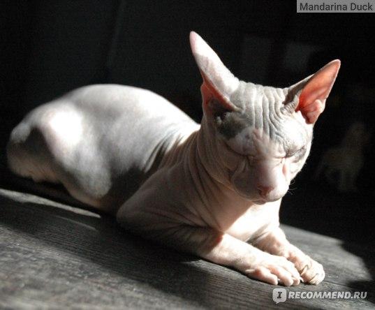 Шампунь-кондиционер Doctor Vic Professional «2 в 1» для бесшерстных кошек (сфинксов) фото