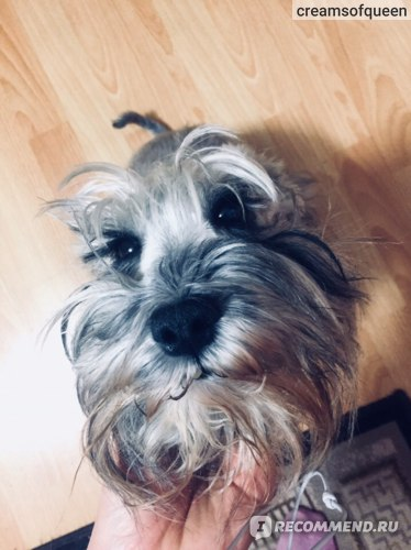 Корм для собак Hill`s Prescription Diet Urinary Care при мочекаменной болезни  фото