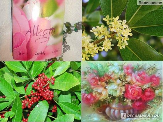 Dzintars Allegro фото