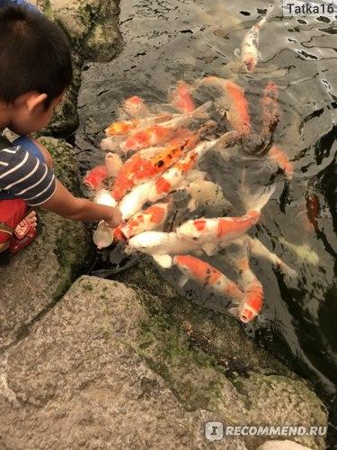 Этих рыб можно покормит за определенную плату из бутылочки