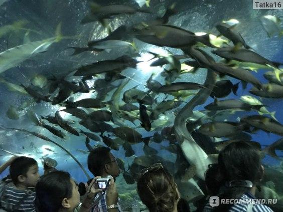 Океанариум Underworld, Таиланд. Паттайя фото