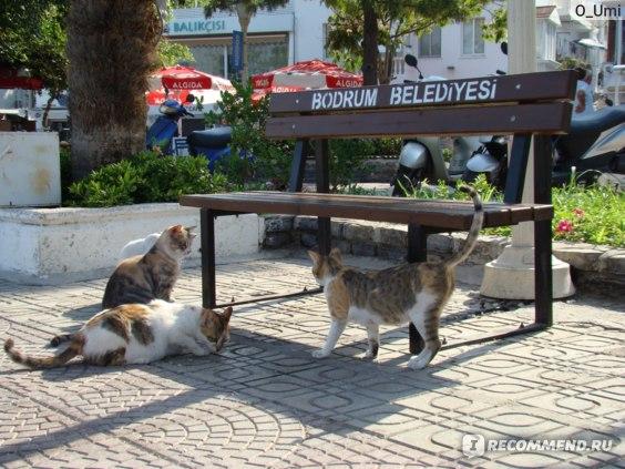 Турция, Бодрум фото