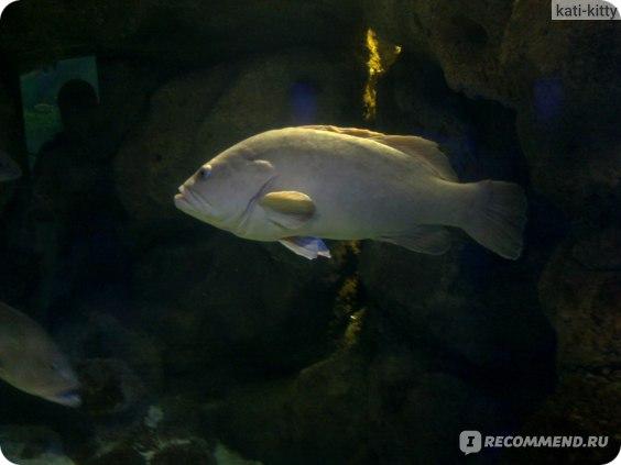 Рыбина огромная, внушает уважение своим размером