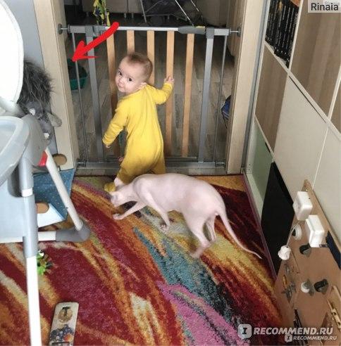 Стрелка указывает на кошачий горшок. Дверь в туалет слева, сразу за стеной