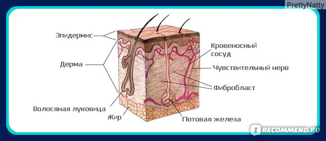 Компьютерная диагностика волос (Трихоскопия) фото
