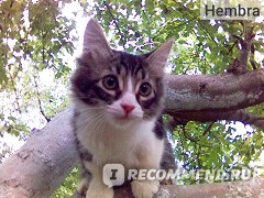 Корм для кошек Happy cat ягненок и телятина   с зелёной фасолью 100 г (кусочки в желе) фото