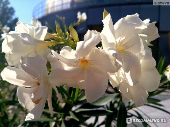 Ботанический сад, Донецк фото