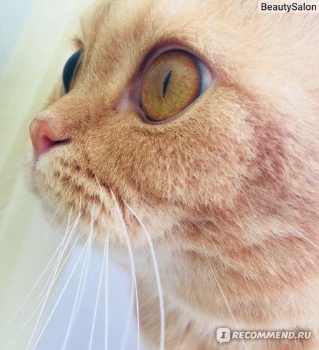 Спрей отпугивающий Doctor VIC Для кошек фото