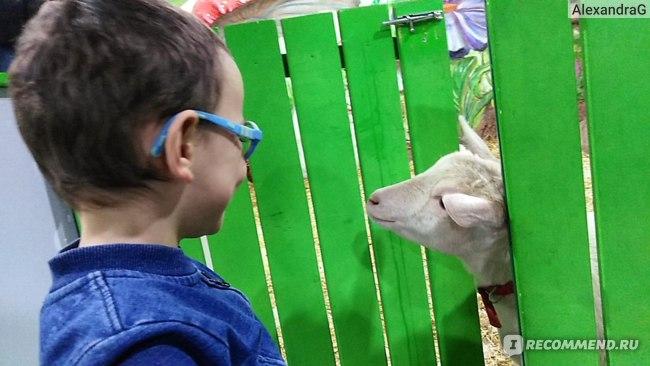 """Контактный зоопарк """"Белый кенгуру""""  ТРЦ Вегас, Москва фото"""
