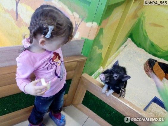 """Контактный зоопарк """"Ребятам о зверятах"""" ТЦ Гелиос, Королев, Досуг с детьми фото"""