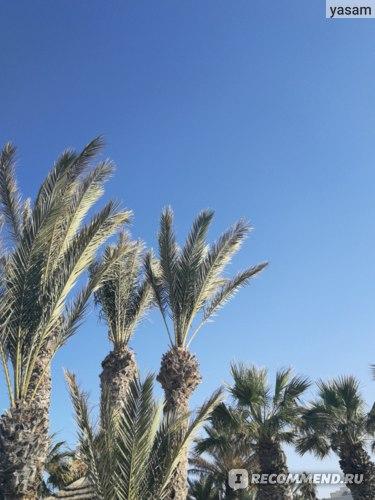отель иберостар джерба тунис