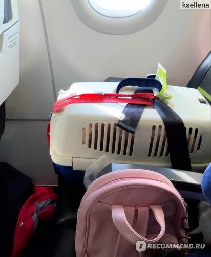 Перевоз кота в самолете