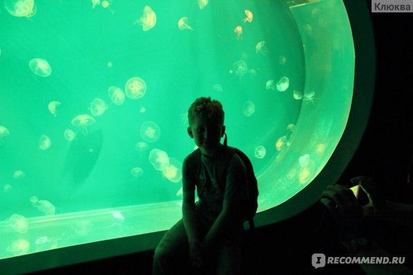Океанариум, Санкт-Петербург фото