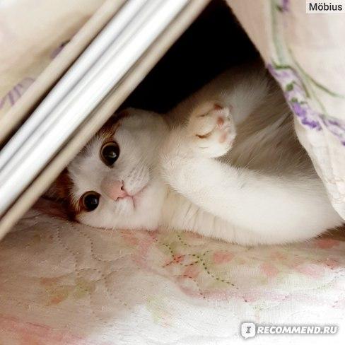 Лечение заболеваний кожи Api-San Стоп - зуд суспензия для кошек фото