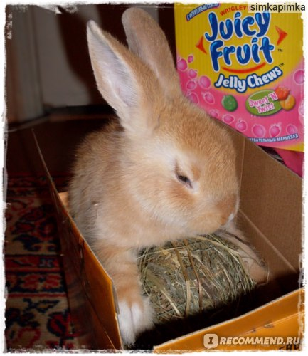 залезка в коробку с сеном