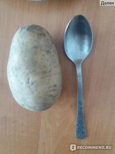 Большая картошка. Размер