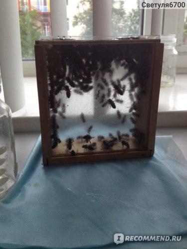 А это пчелки, которые меня лечили