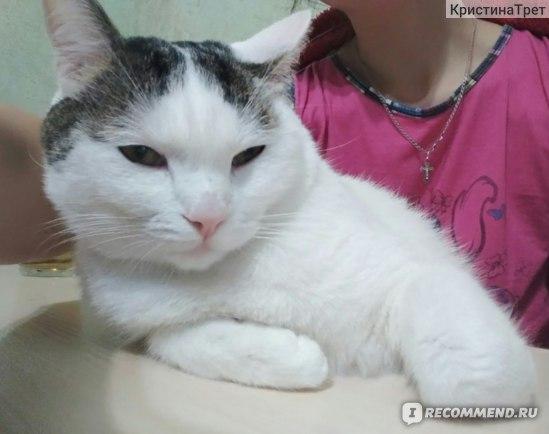 """Корм для кошек Daily Cat Casual Line """"Adult Steri Lite Turkey"""", для стерилизованных кошек, с индейкой"""