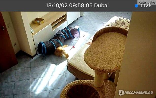 Кот бесится